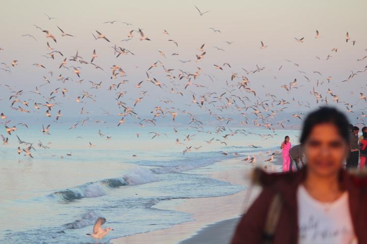 Seagulls Mandvi