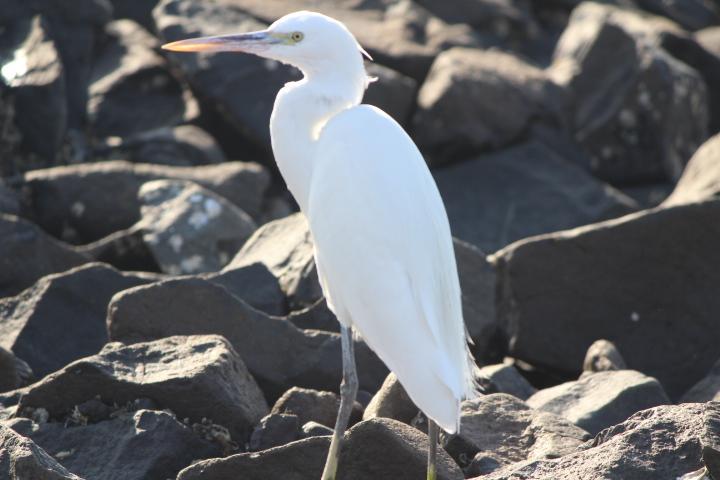 White Crane Mandvi