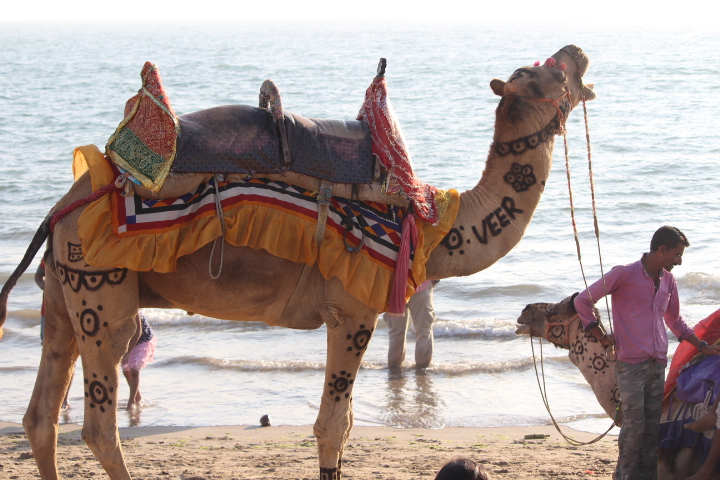 Mandvi Beach camel ride